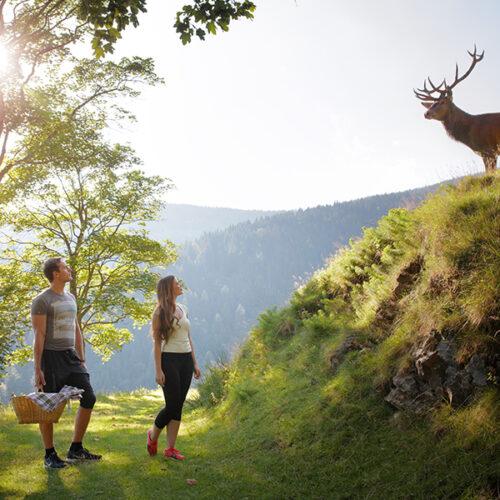 Ogled farme jelenov in pokušina domačih izdelkov BREZPLAČNO