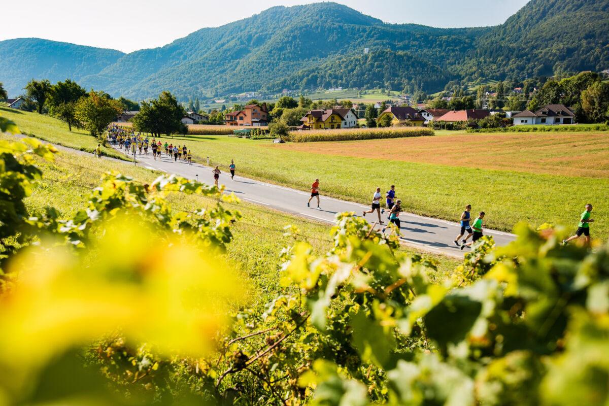 Tekači med vinogradi - 9. Konjiški maraton 2021 Foto: Grega Valancic / Sportida